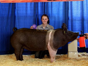 R&K Showpigs Sows